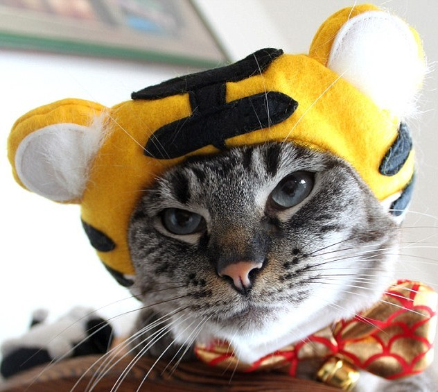 tigerb-cat-hat-e1453187447821